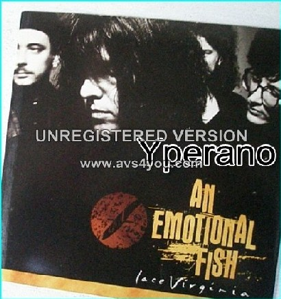 """AN EMOTIONAL FISH: Lace Virginia 7"""" Check video (featuring Kate Moss)"""